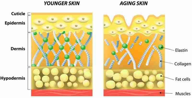 Younger Skin vs Skin With Premature Ageing