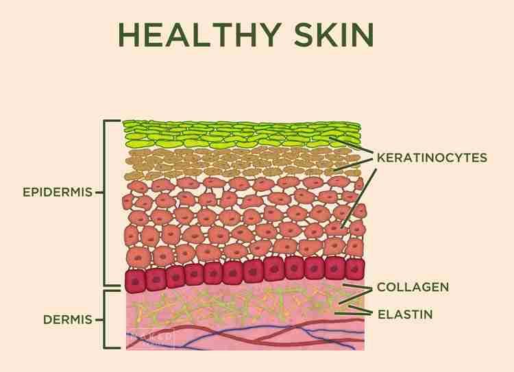 Healthy Skin Before Microneedling Damage
