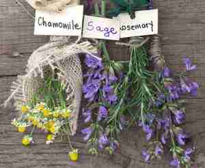 herbs-for-the-skin-sage-rosemary-and-chamomile